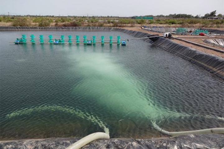 AquaCulture Business